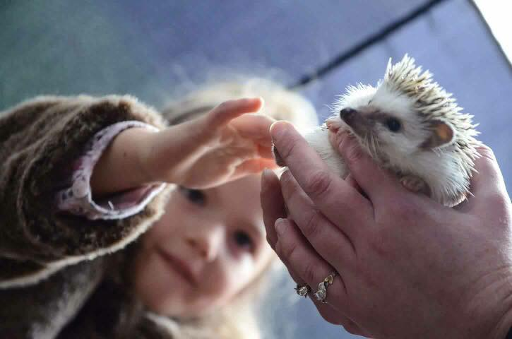 hedgehog-party-stroke
